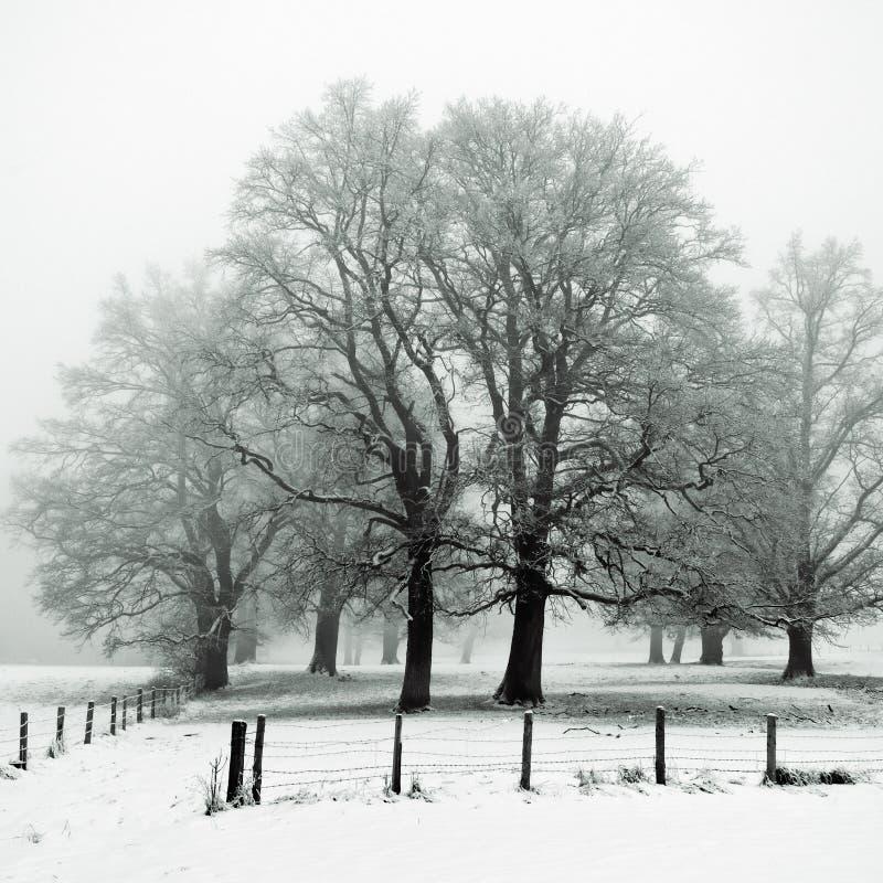 橡树冬天木头 库存照片