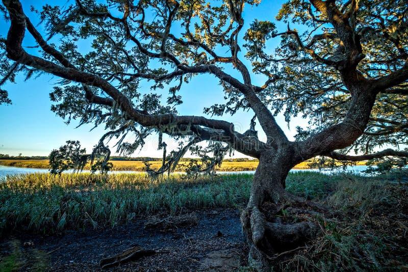 橡树和美好的自然在日落在种植园 库存图片