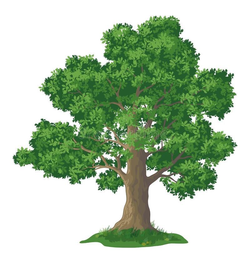 橡树和绿草 库存例证
