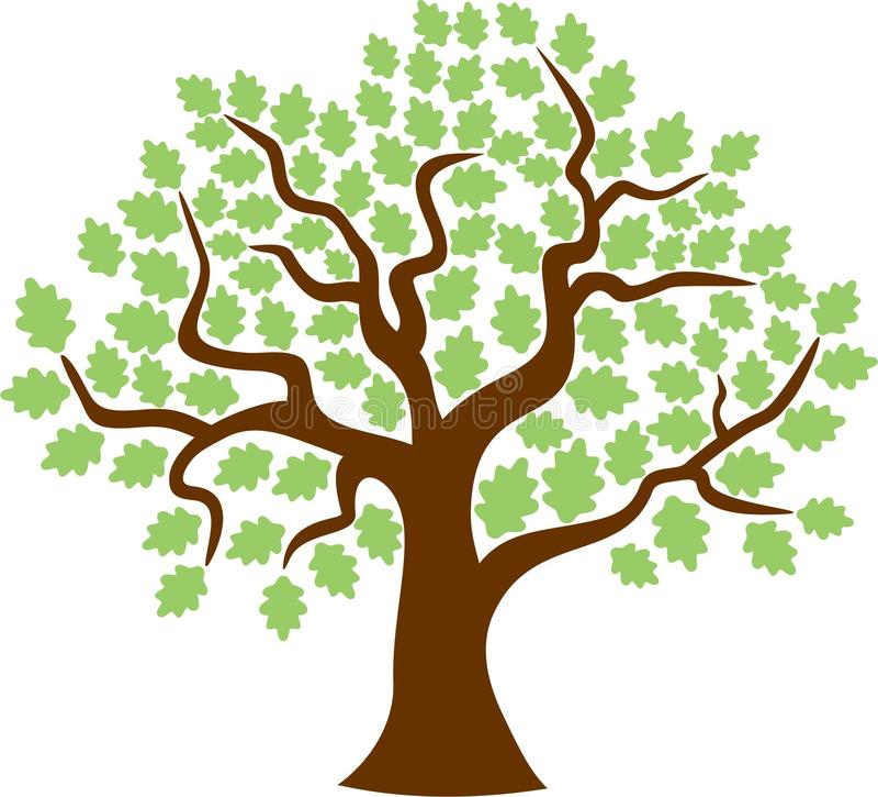 橡树枫叶 向量例证