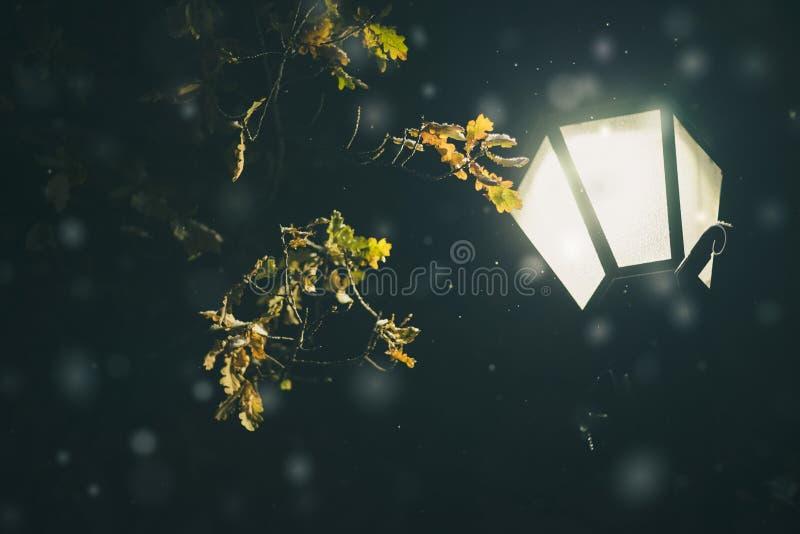 橡树根据路灯柱分支和落的雪 免版税图库摄影