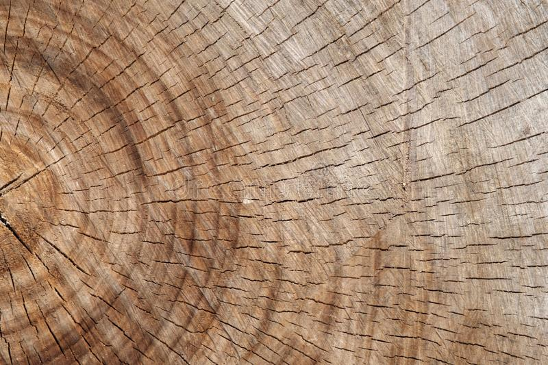 橡树老裁减表面  图库摄影