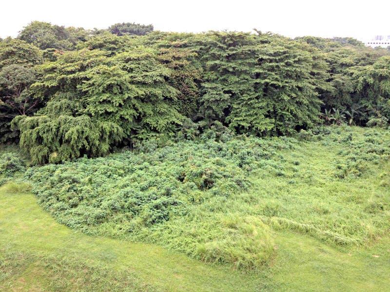 次要雨林,后港,新加坡 图库摄影