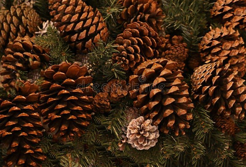 欢乐冬天背景单件棕色锥体在背景云杉分支、圣诞节和新年 库存图片