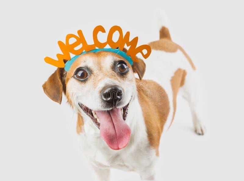 欢迎宠物枪口 免版税图库摄影