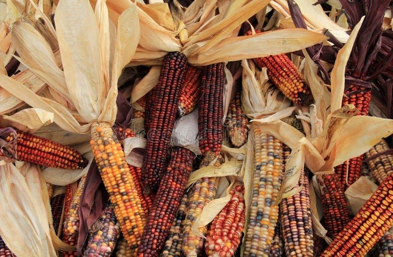 欢迎的印第安玉米在秋天 免版税库存图片