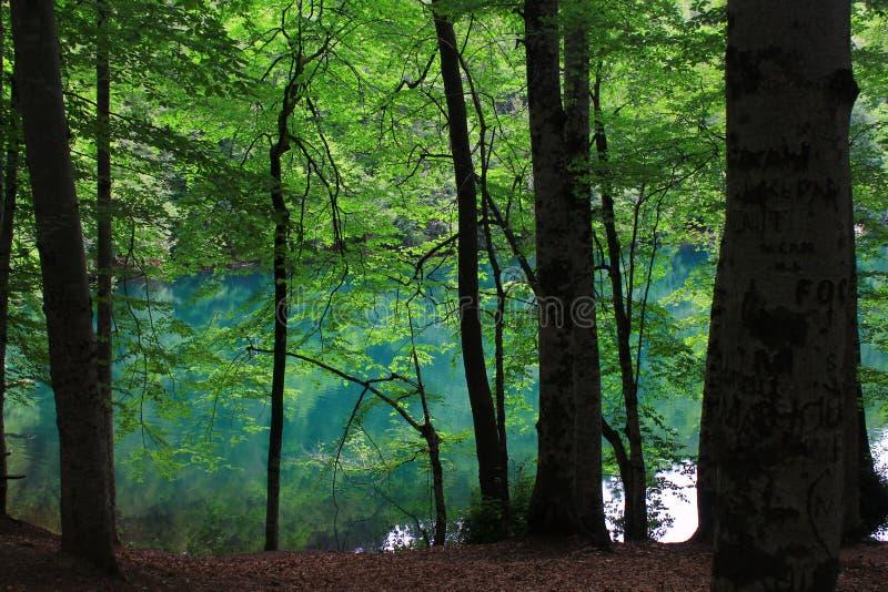 欢迎的密林 库存图片