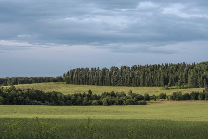 欧亚大陆夏天风景  免版税库存照片