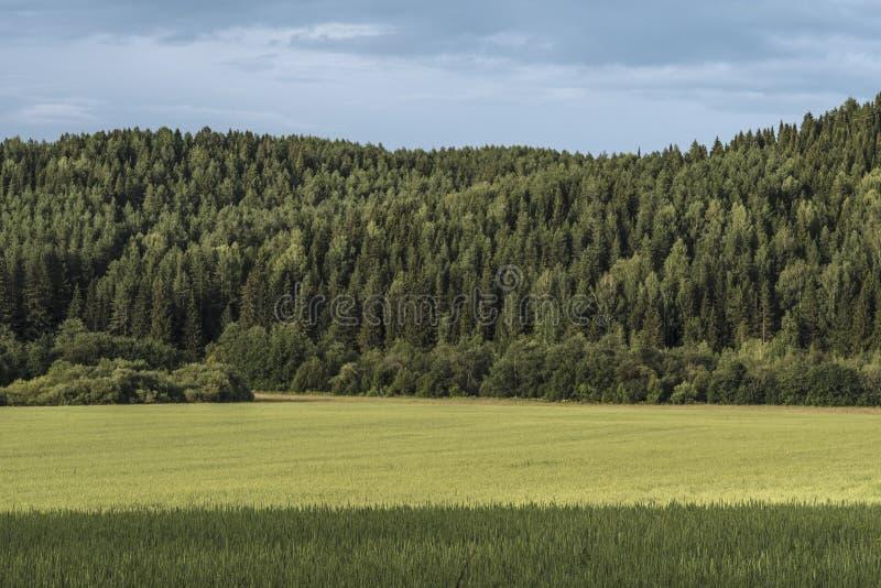 欧亚大陆Sumer风景  免版税库存照片