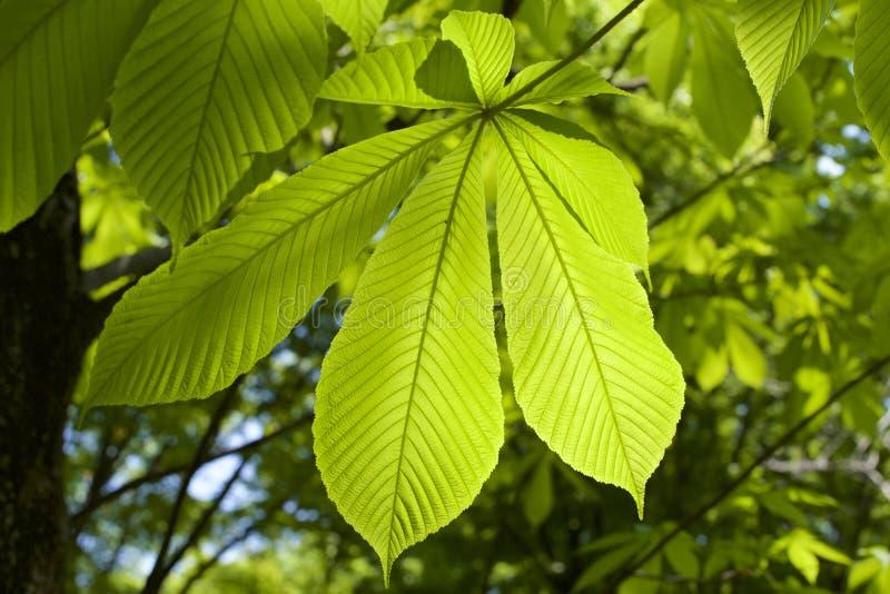 背景 壁纸 绿色 绿叶 树叶 植物 桌面 800_533图片