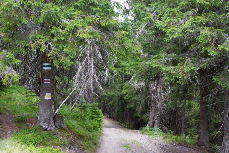 欧洲土路在云杉的森林里在乌克兰喀尔巴汗 游人的颜色标记 能承受的清楚的生态系 免版税库存照片