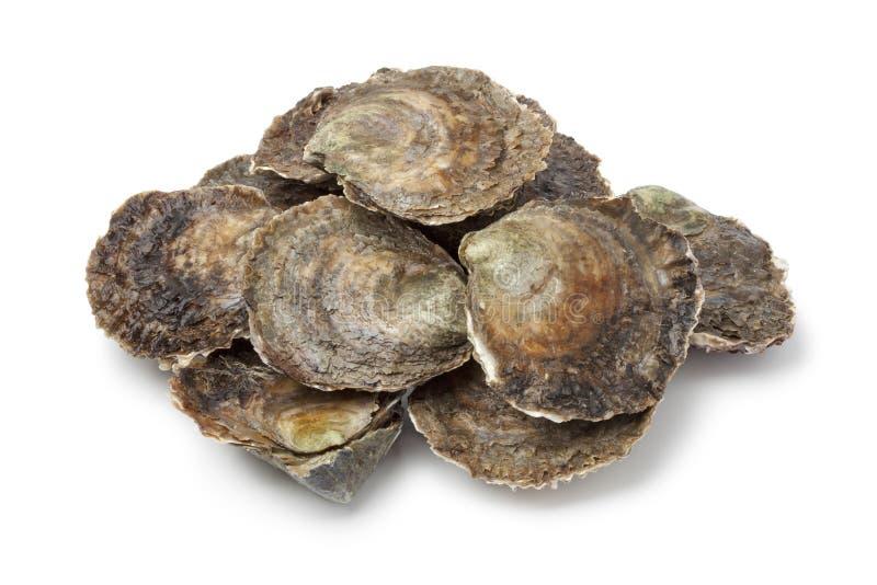 欧洲平面的新鲜的牡蛎 免版税库存图片