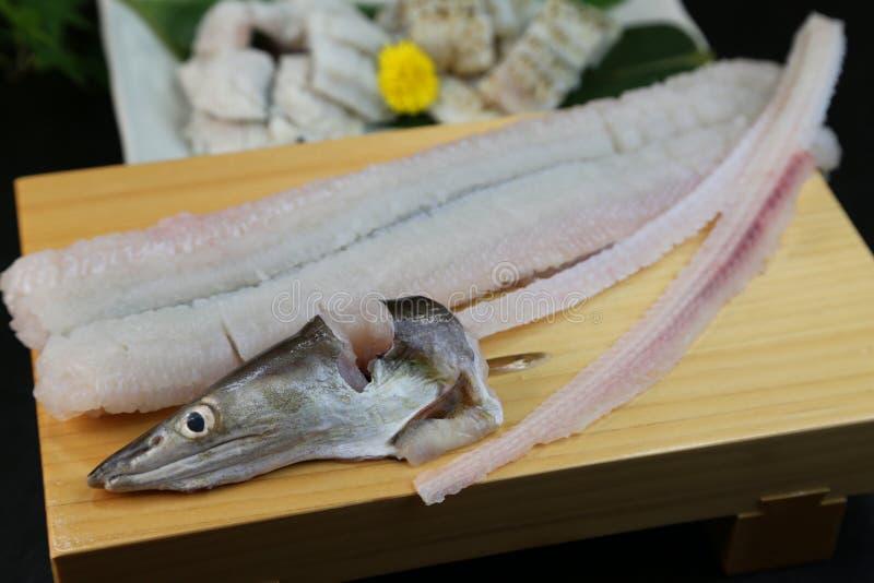 欧洲康吉鳗的矛对待豪华粮食在日本 免版税库存照片
