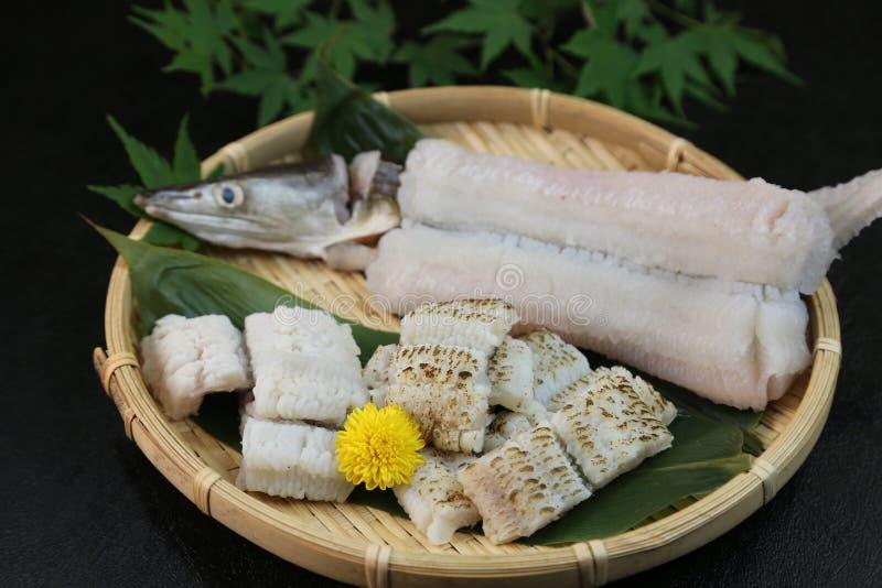 欧洲康吉鳗的矛对待豪华粮食在日本 免版税图库摄影