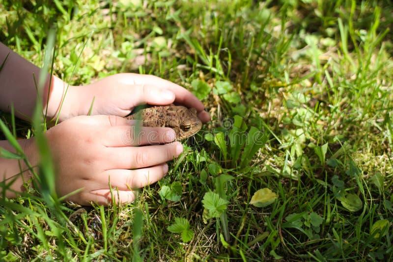 欧洲棕色蟾蜍 儿童感人的棕色蟾蜍坐在狂放的自然的绿色夏天草 免版税库存照片