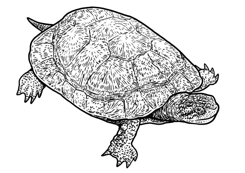 欧洲池塘乌龟例证,图画,板刻,墨水,线艺术,传染媒介 向量例证