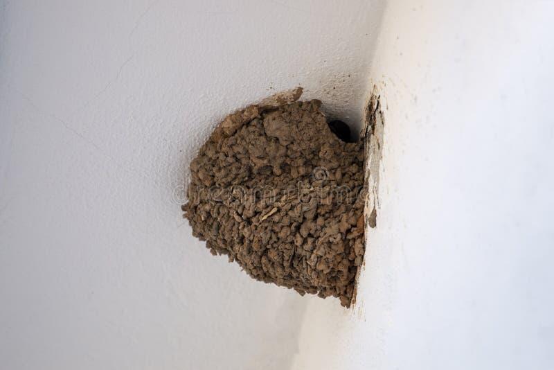 欧洲燕子巢 免版税图库摄影