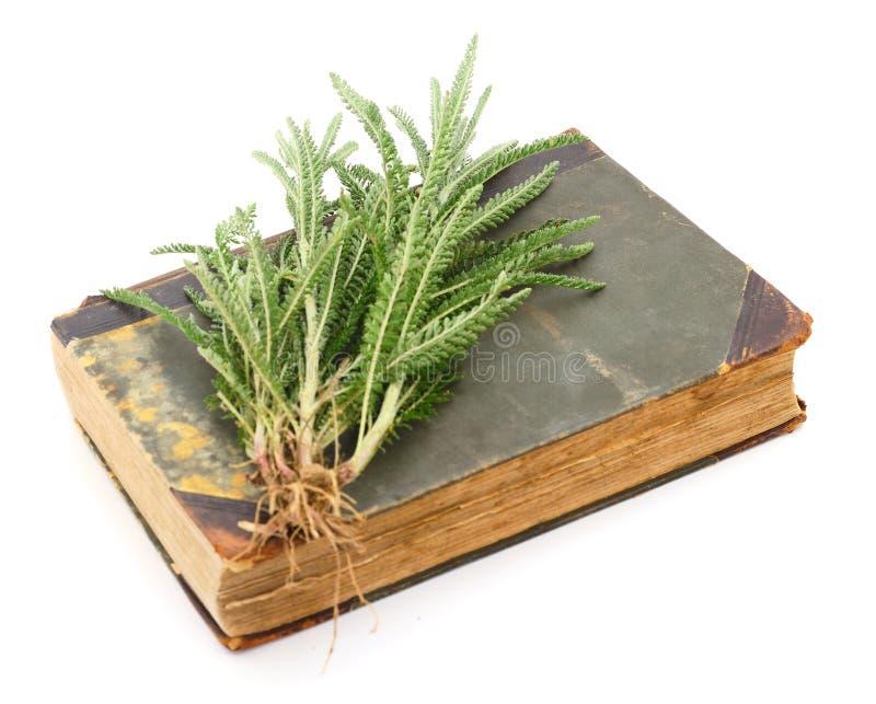 欧蓍草叶子在一本旧时书说谎 库存照片