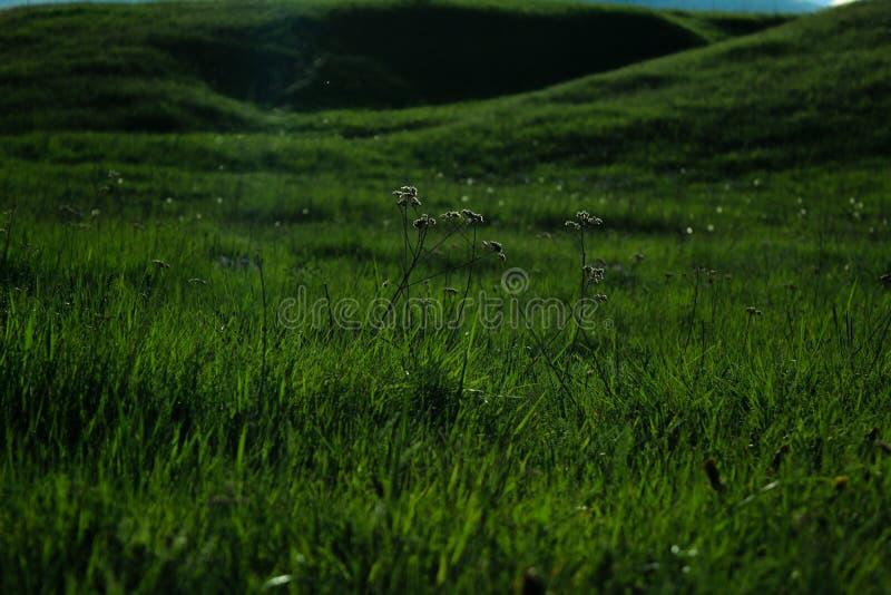 欧蓍草的谷 库存照片