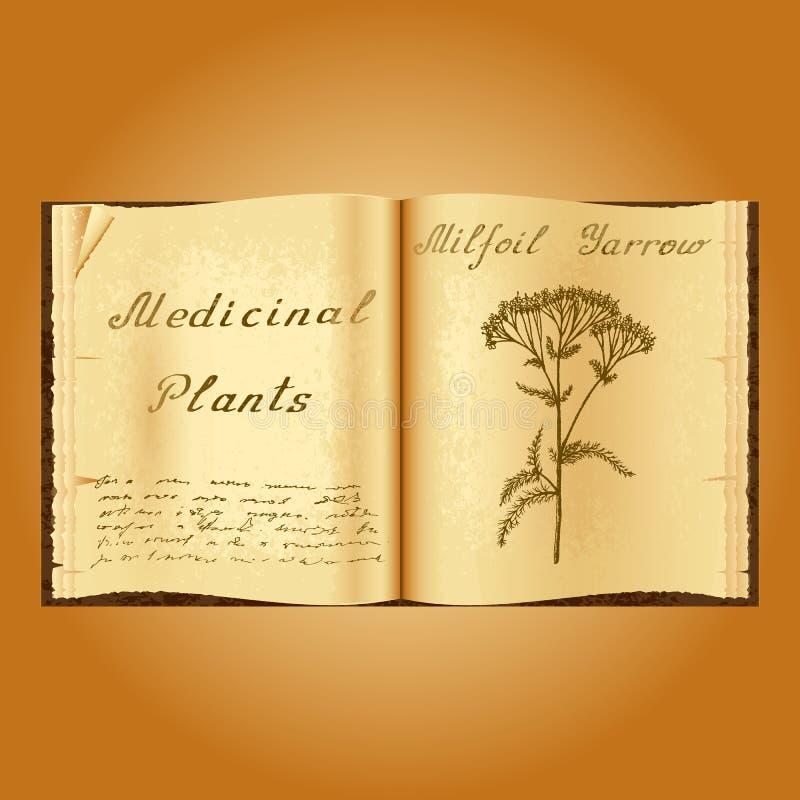 欧蓍草Achillea millefolium 植物的例证 医疗工厂 书中医师老开放书 库存例证