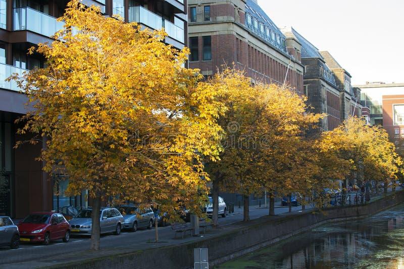 欧洲七叶树 免版税图库摄影