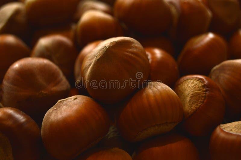欧洲榛树的坚果 库存照片