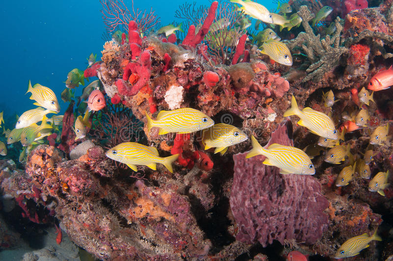 欧洲甜樱桃在一块礁石的海龟在南佛罗里达 免版税库存图片