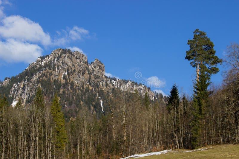 欧洲阿尔卑斯,森林,风景 免版税库存图片