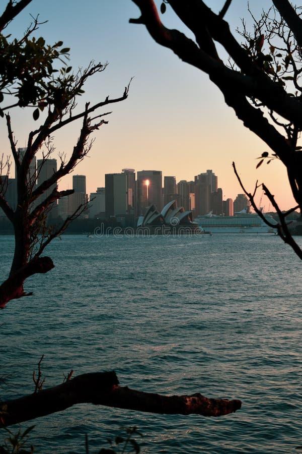 歌剧院海洋树日落 免版税库存图片