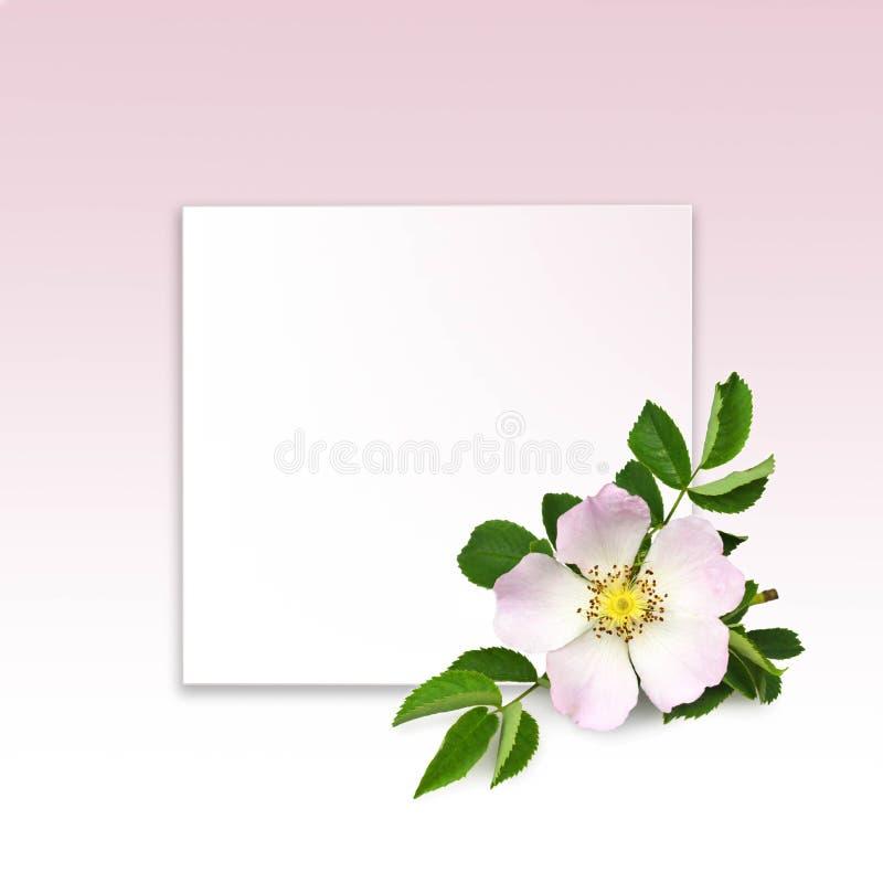 正方形花卉框架大模型 库存照片