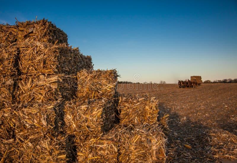 正方形被堆积的干草捆 库存图片
