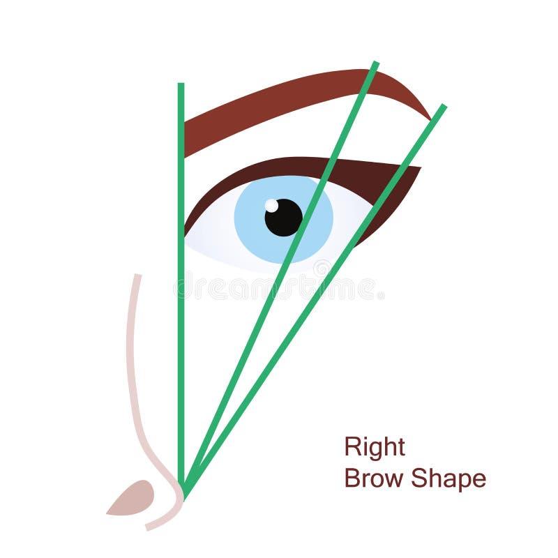 正确的眉头形状 向量例证