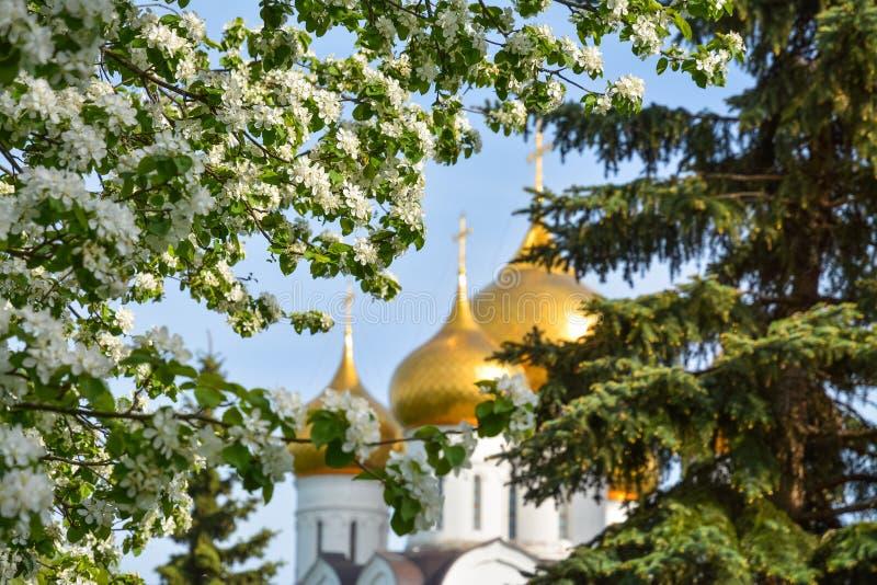 以正统大教堂为背景的开花的苹果树分支 免版税库存图片