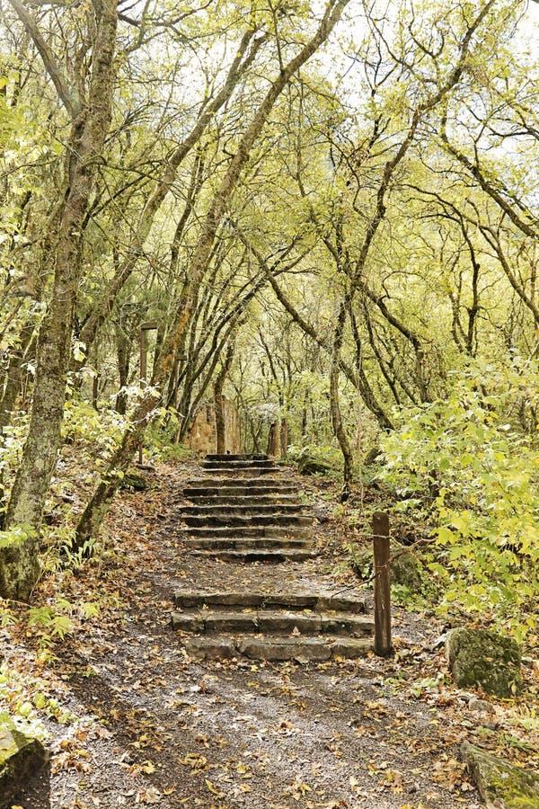 步在森林里 免版税库存照片