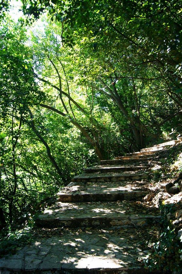 步在绿色树丛里 免版税库存图片