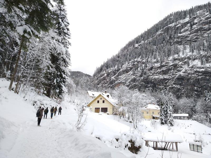 步行低谷Hallstatt,奥地利多雪的森林  从顶层的冬天视图 免版税库存照片