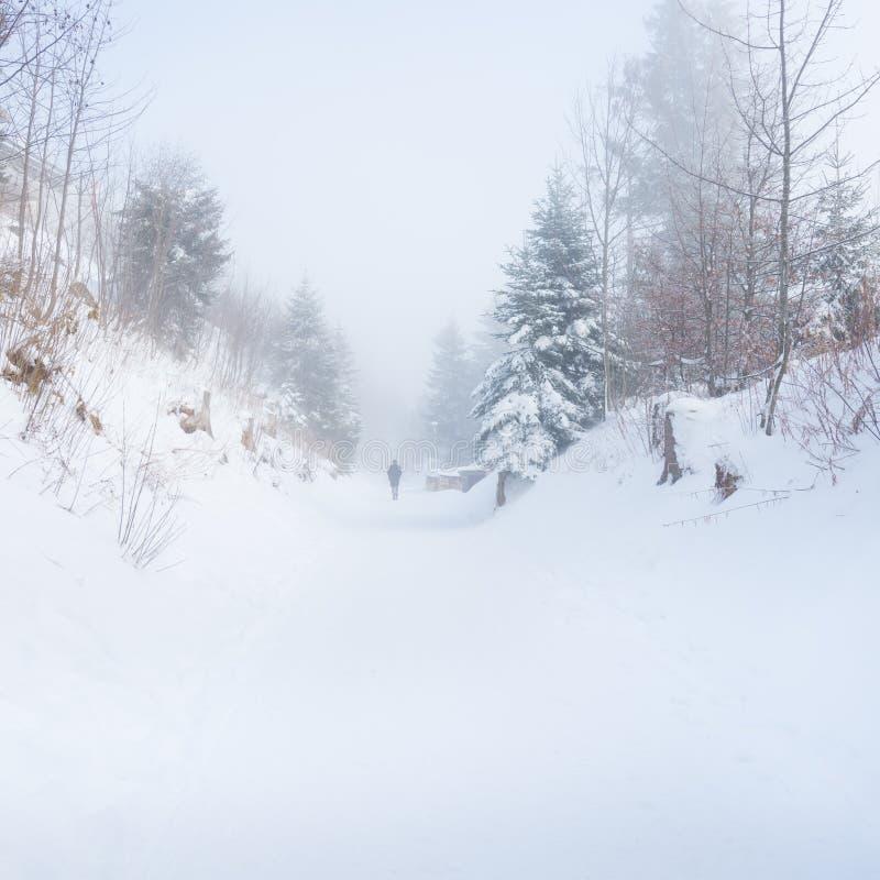 步行在冬天有雾的森林里 库存图片