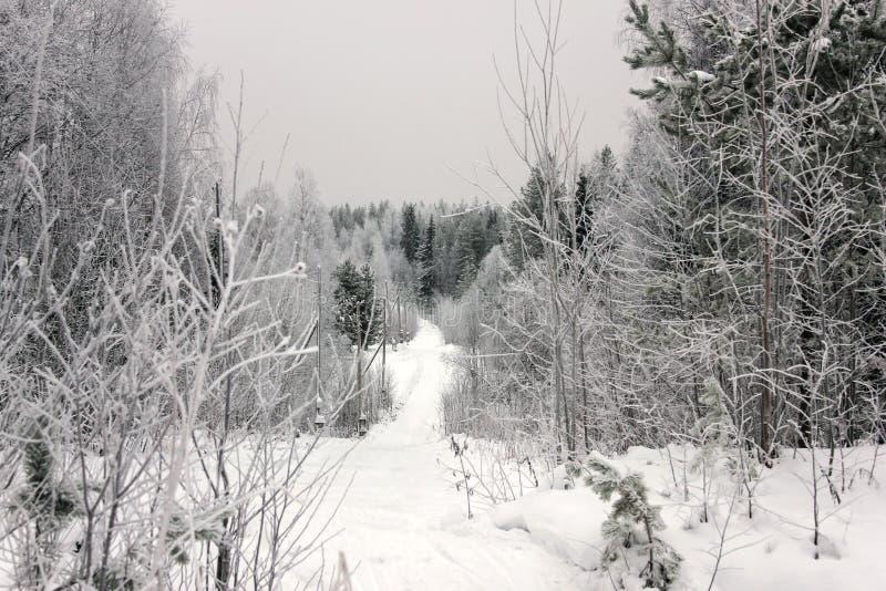 步行在冬天森林 速度滑雪的轨道 美丽和异常的路和森林足迹 库存图片