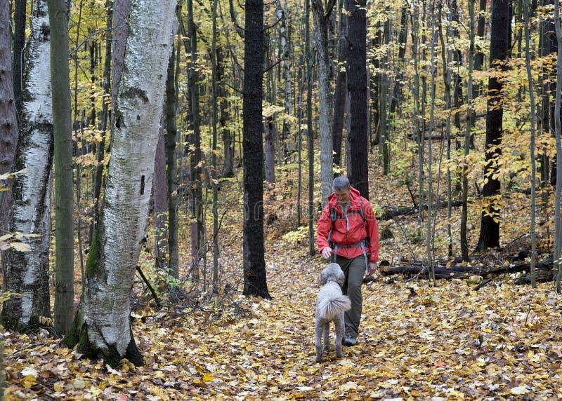 步行在有狗的森林里的人 免版税库存照片