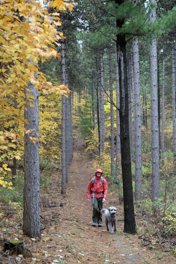 步行在有狗的森林里的人 库存图片