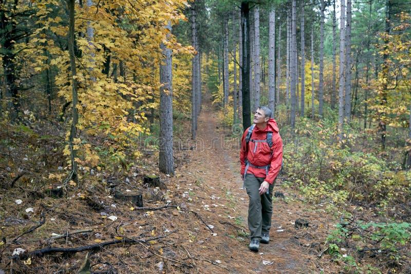 步行在森林里的人 免版税库存照片