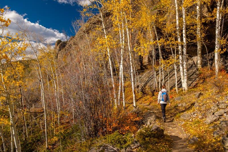 步行在白杨木树丛里的游人秋天 免版税库存照片