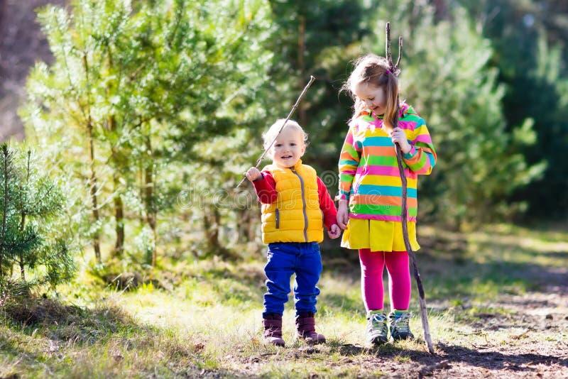 步行在秋天森林里的孩子 库存图片