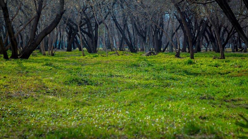 步行在绿草的公园 健康生活方式和新鲜空气 r 春天、秋天和夏天 树庭院 免版税图库摄影