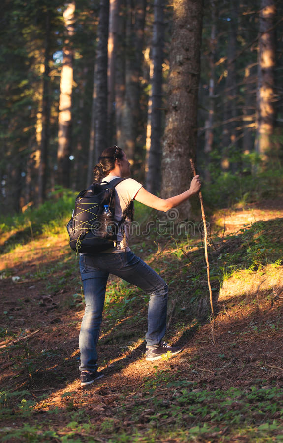 步行在美丽的森林里的健康妇女 免版税库存图片