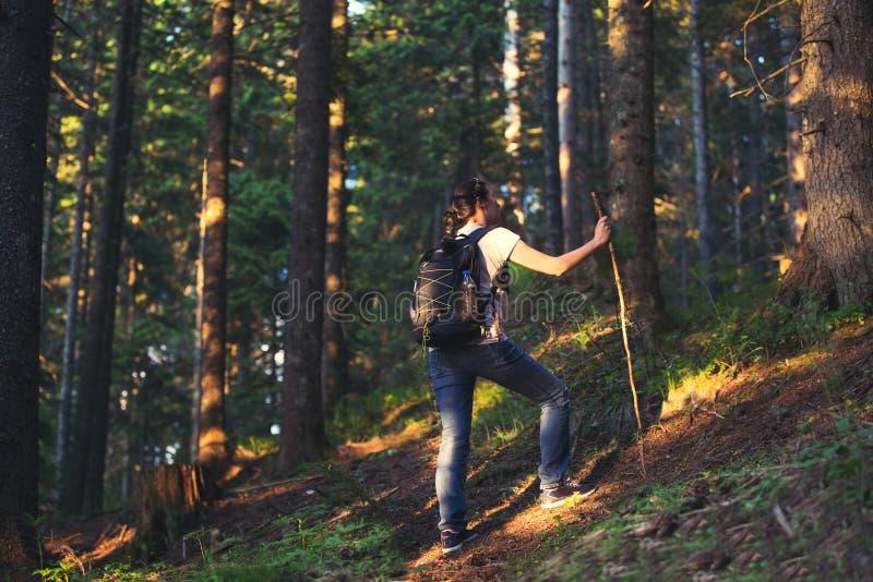 步行在美丽的森林里的健康妇女 免版税库存照片