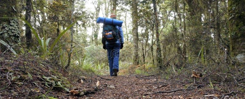 步行在雨林里的妇女远足者 免版税库存图片