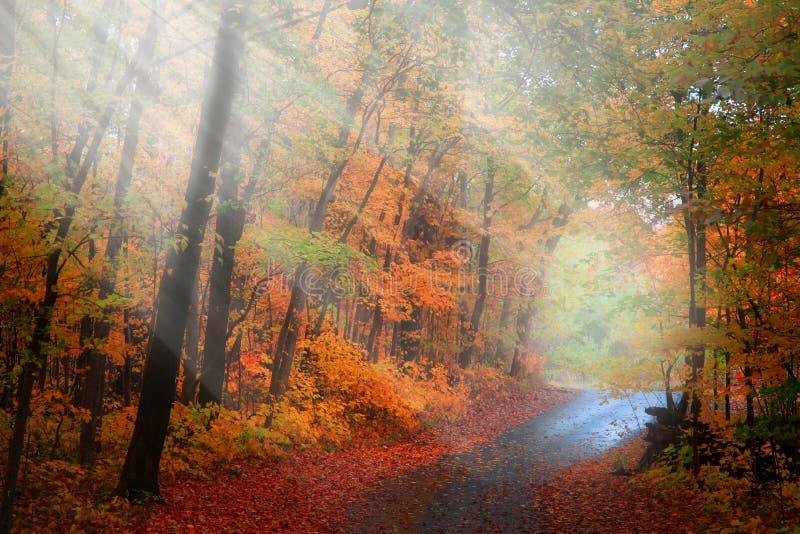步行方式通过清早太阳光芒 库存照片