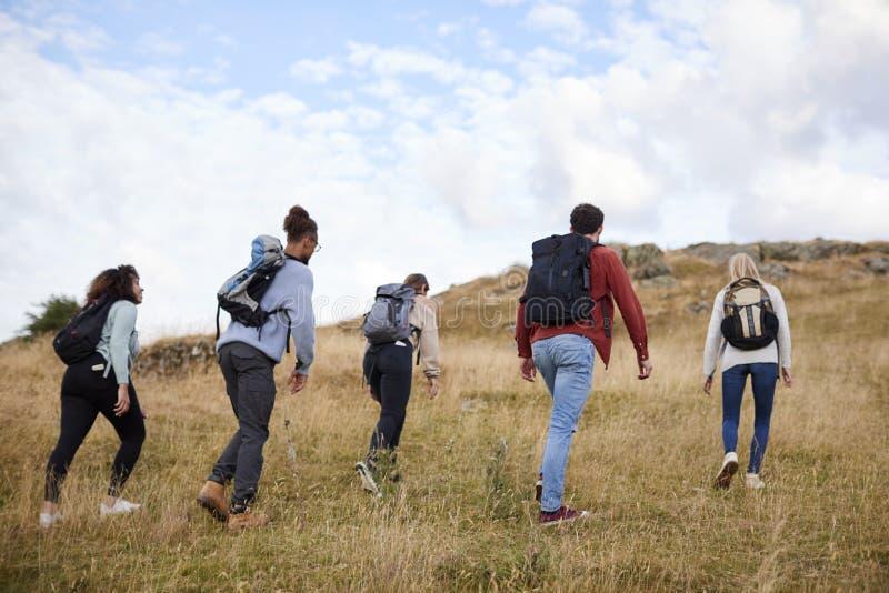 步行横跨往山顶的一个领域,后面看法的一个小组五个年轻成人朋友 免版税库存图片