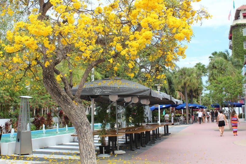步行沿着向下林肯路,迈阿密海滩,有春天的佛罗里达的顾客在盛开, 2013年4月 图库摄影